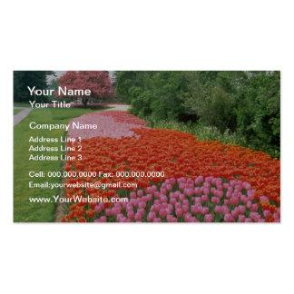 Red Canadian Tulip Festival, Experimental Farm, Ot Business Cards