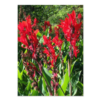 Red Canna Flowers In Bloom Photo Blank Invitations