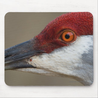 Red Cap Mouse Pad