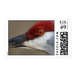 Red Cap Postage