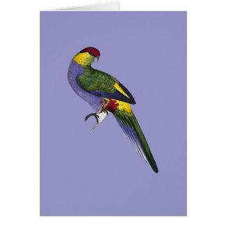 Red Capped Parakeet Parrot Bird Card