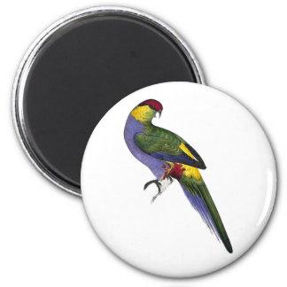 Red Capped Parakeet Parrot Bird Magnet