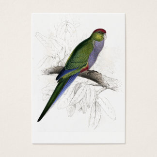 Red-Capped Parrakeet (Female) by Edward Lear Business Card