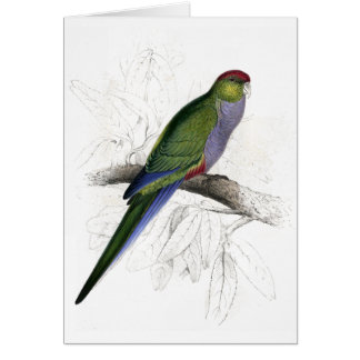 Red-Capped Parrakeet (Female) by Edward Lear Greeting Card