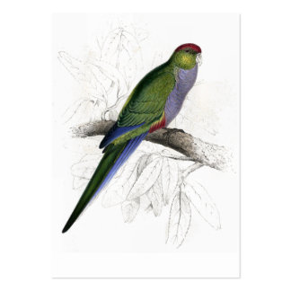 Red-Capped Parrakeet (Female) by Edward Lear Large Business Card