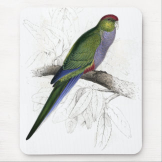 Red-Capped Parrakeet (Female) by Edward Lear Mouse Pad