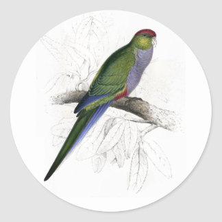 Red-Capped Parrakeet (Female) by Edward Lear Round Sticker