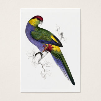 Red-Capped Parrakeet (Male) by Edward Lear Business Card