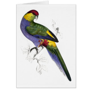 Red-Capped Parrakeet (Male) by Edward Lear Greeting Card