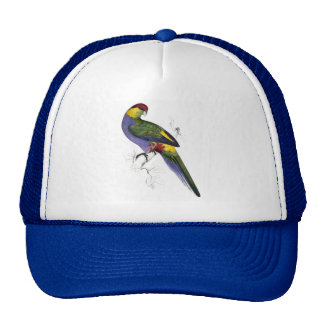 Red-Capped Parrakeet (Male) by Edward Lear Cap
