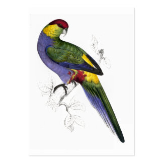 Red-Capped Parrakeet (Male) by Edward Lear Large Business Card
