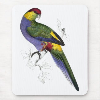 Red-Capped Parrakeet (Male) by Edward Lear Mouse Pad
