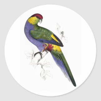 Red-Capped Parrakeet (Male) by Edward Lear Round Sticker