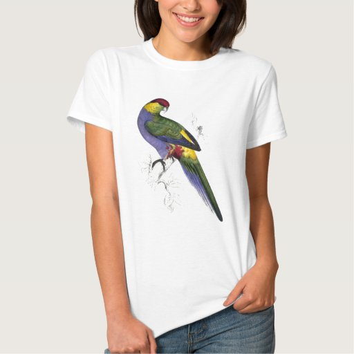 Red-Capped Parrakeet (Male) by Edward Lear T-Shirt