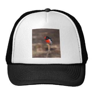 Red-capped Robin Trucker Hat