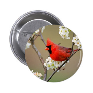 Red Cardinal 2 Inch Round Button