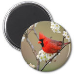 Red Cardinal 2 Inch Round Magnet