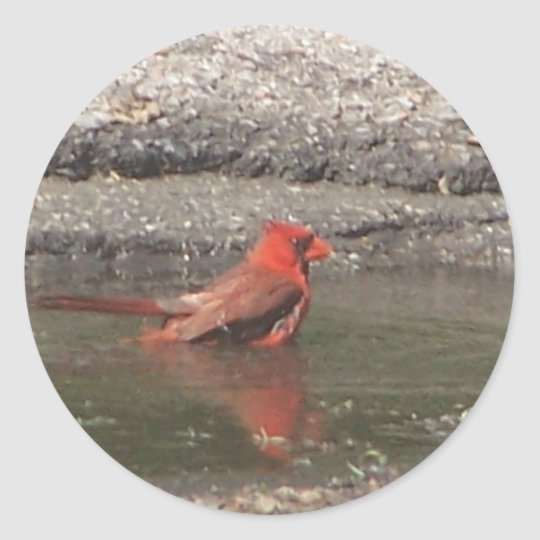 red cardinal bathes classic round sticker