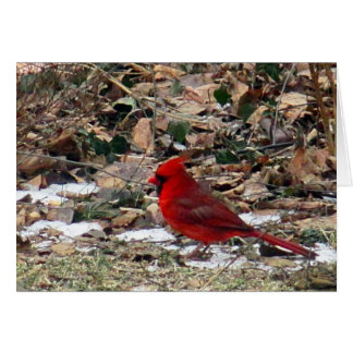 Red Cardinal Bird in Leaves Card