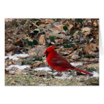 Red Cardinal Bird in Leaves Stationery Note Card