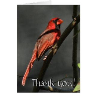 Red Cardinal Bird Thank You Note Card