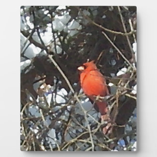 Red Cardinal in Snow Laden Trees Photo Art Plaques
