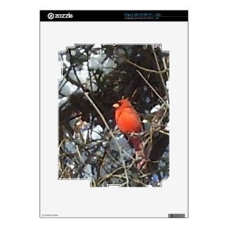 Red Cardinal in Snow Laden Trees Photo Art Skins For iPad 2