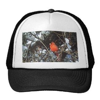 Red Cardinal in Snow Laden Trees Photo Art Trucker Hat