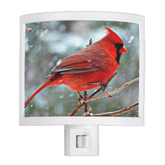 Red Cardinal in the Snow Night Lights
