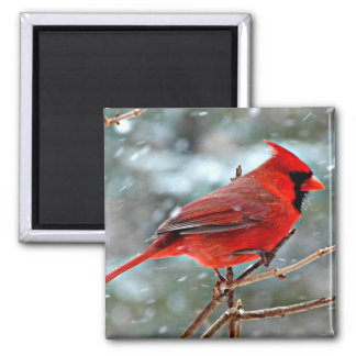 Red Cardinal in the Snow 2 Inch Square Magnet