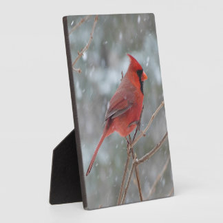 Red cardinal in the snow display plaques