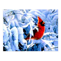 Red Cardinal In the Winter Snow Postcard