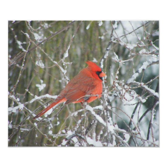 Red Cardinal in Winter Poster