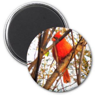 Red Cardinal Refrigerator Magnet