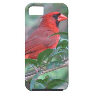 Red Cardinal Male Bird iPhone SE/5/5s Case