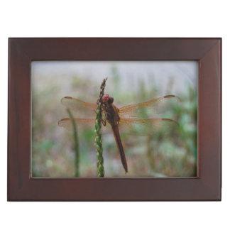 Red Cardinal Meadowhawk Dragonfly Memory Box