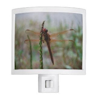 Red Cardinal Meadowhawk Dragonfly Night Light