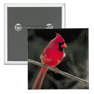Red Cardinal Perched on a Tree Branch Button