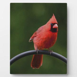 Red Cardinal. Display Plaque
