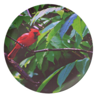 Red Cardinal Dinner Plate
