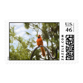 Red Cardinal Postage