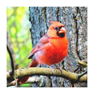 Red Cardinal Summer Square Print