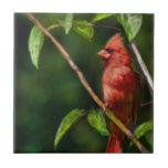 Red Cardinal Tiles