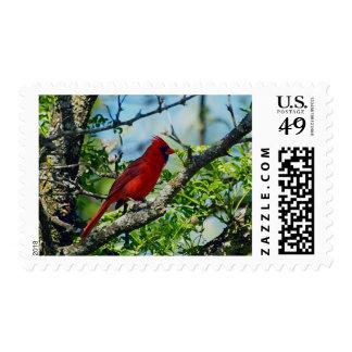 Red Cardinal  Wild Bird Photograph Postage