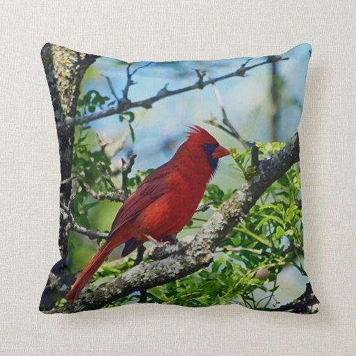 Cardinal Bird Throw Pillows : Red Cardinal Wild Bird Photograph Throw Pillow Zazzle