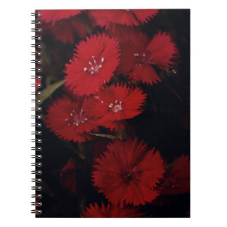 red carnation notebooks