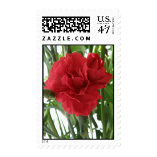 Red Carnation Postage Stamps