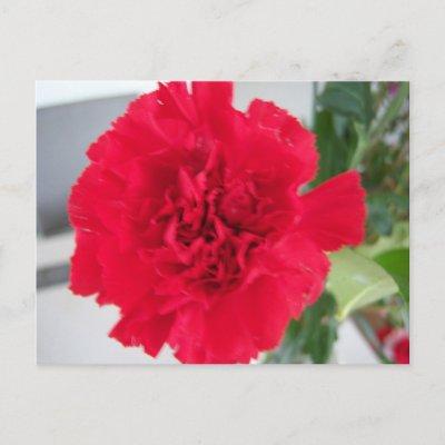 http://rlv.zcache.com/red_carnation_postcard-p239103698815251595qibm_400.jpg