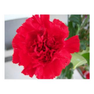 Red Carnation Postcard