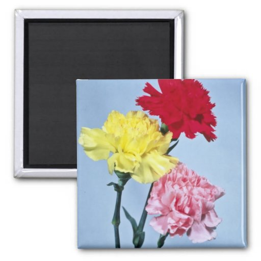 Red Carnation study on white flowers Refrigerator Magnets